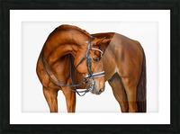 Chestnut Horse Portrait Picture Frame print