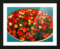 Parade of Tulips Picture Frame print