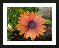 Alive Picture Frame print