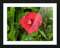 Rain & Nature Picture Frame print