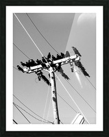 Birds on a wire Picture Frame print