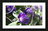 Deep Purple Picture Frame print