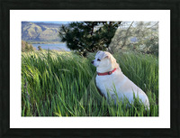 Blossom in Tall Grass Picture Frame print
