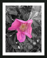 BlackPinkLove Picture Frame print