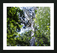 Skyview Canopy Picture Frame print
