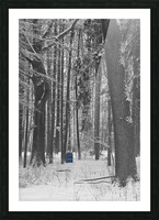 Blue Barrel in Woods Picture Frame print