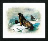 Walrus Illustration Picture Frame print