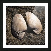 Seashells Picture Frame print