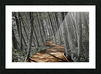 Boardwalk in the Woods Picture Frame print