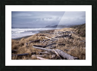 Beached Driftlogs Picture Frame print