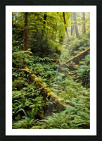 Fern Hollow Picture Frame print