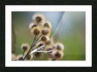 Burdock Bouquet Picture Frame print