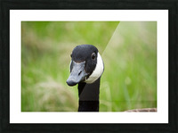 Toothpick Goose Picture Frame print