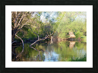 Relaxing Pond View Picture Frame print