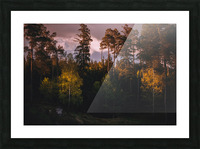 Morning forest Picture Frame print