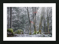 Winter forest Picture Frame print