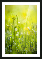 Summer meadow Picture Frame print