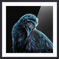 Curious Raven Picture Frame print