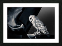 Barn owl Picture Frame print