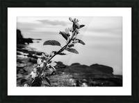 Elegance  Picture Frame print