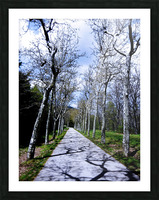 Casita del Principe 6 of 7 - Park and Gardens - The Royal Monastery of San Lorenzo de El Escorial - Madrid Spain Picture Frame print