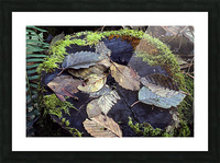 Mossy Stump Picture Frame print