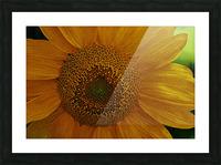 Enhanced Sunflower Picture Frame print