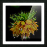 Crown Imperial Picture Frame print