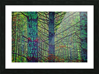 Forest Splendor Picture Frame print