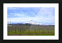 Spring at the Orchards  - Mount Hood - Oregon Picture Frame print