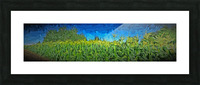 Summer Corn Picture Frame print