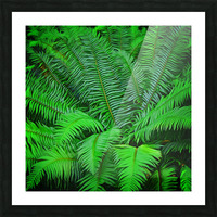 Just Ferns Picture Frame print
