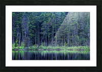 Forest by the Lake Picture Frame print