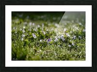 Confettis au jardin 2 Picture Frame print