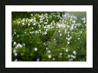 Confettis au jardin 3 Picture Frame print