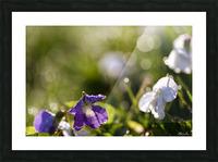 Confettis au jardin 4 Impression et Cadre photo