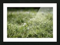Confettis au jardin 1 Picture Frame print