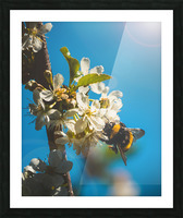 Bumble Cherry Picture Frame print