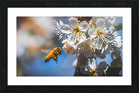Blossom & The Bee Picture Frame print