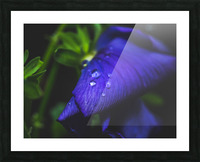 Drops With Blue Picture Frame print