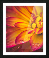 Rain On The Flowers Picture Frame print
