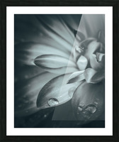 Flowerful Study In A Monochromatic Vibe Picture Frame print