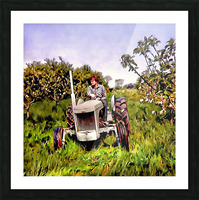 One Man And His Fergie Tractor Picture Frame print