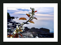 Flower on the Shoreline Picture Frame print