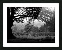 Black and White Field Picture Frame print