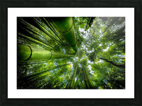 ARASHIYAMA Picture Frame print