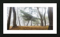 In The Misty Pine Forest Picture Frame print