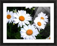 10392131_650028012172_7161699_n Picture Frame print