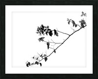 Tree Branch II Picture Frame print