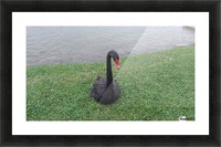 458553_10101518966241952_1018749152_o Picture Frame print